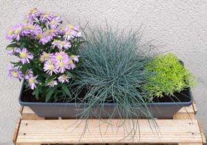 Jardinière de fleurs automnales